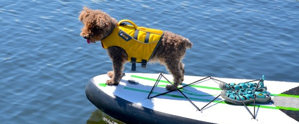 5 Step Guide to SUP With Your Pup