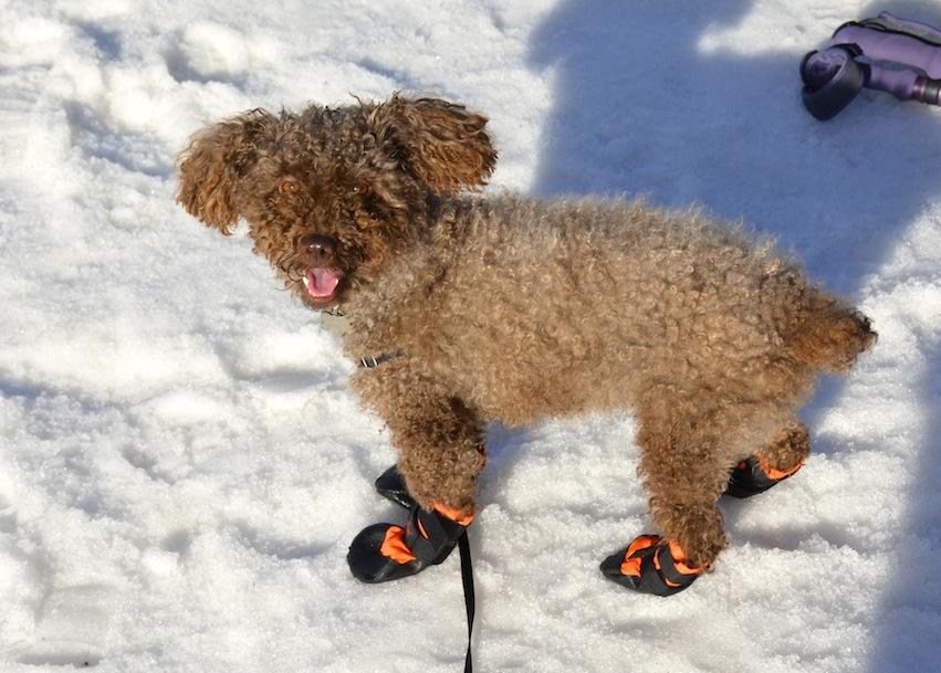 Seth's snowshoeing adventure