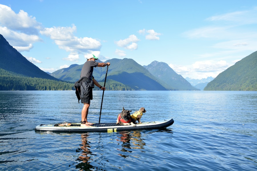paddle board with your dog