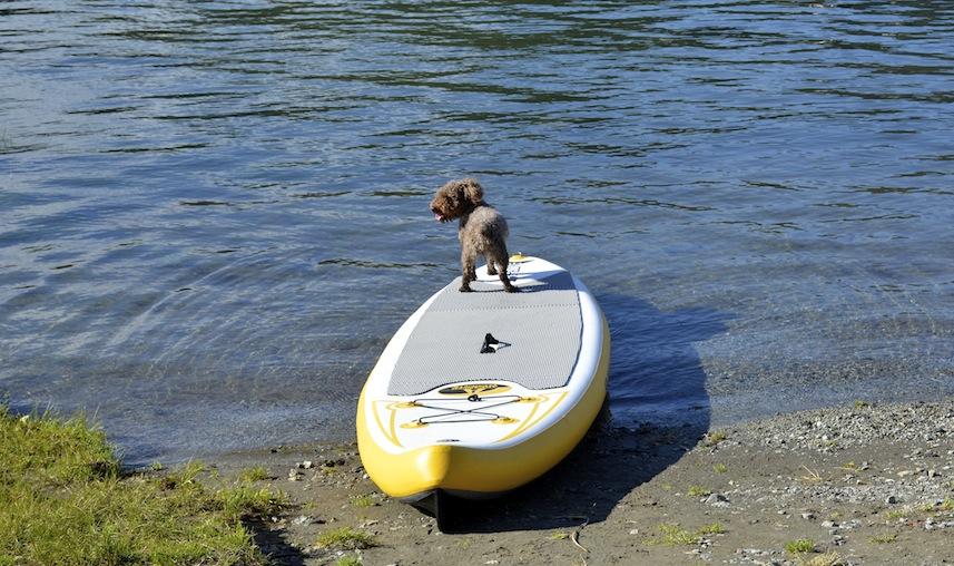 my dog Seth waiting to go paddling on ISUP