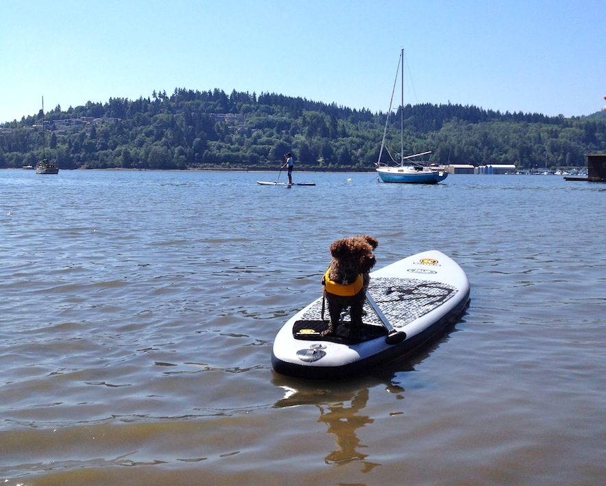 dog Seth on inflatable stand-up paddleboard