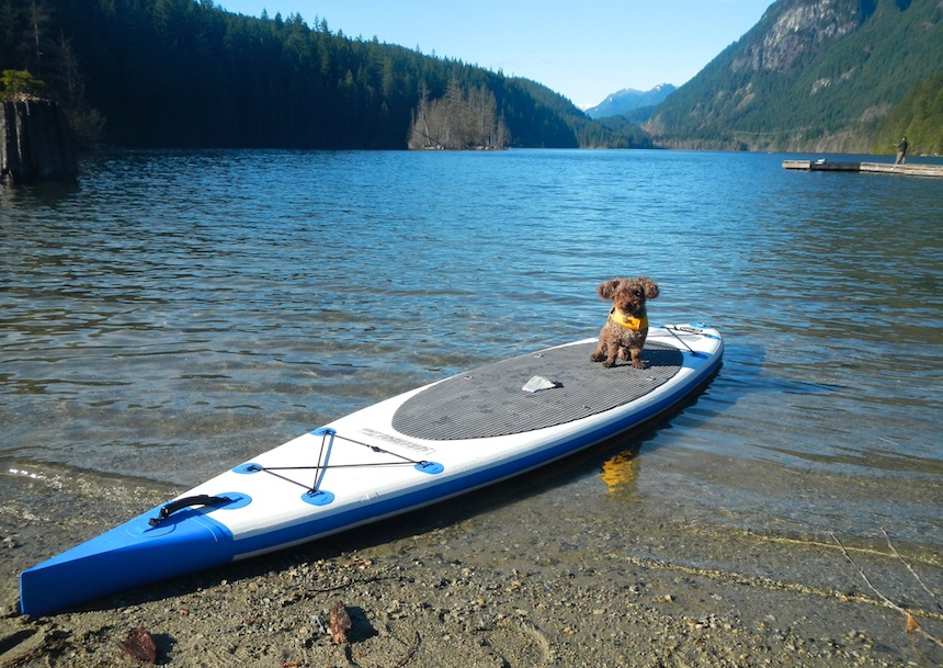 stand up paddle boarding with a dog