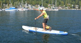 Allround Inflatable Paddle Boards