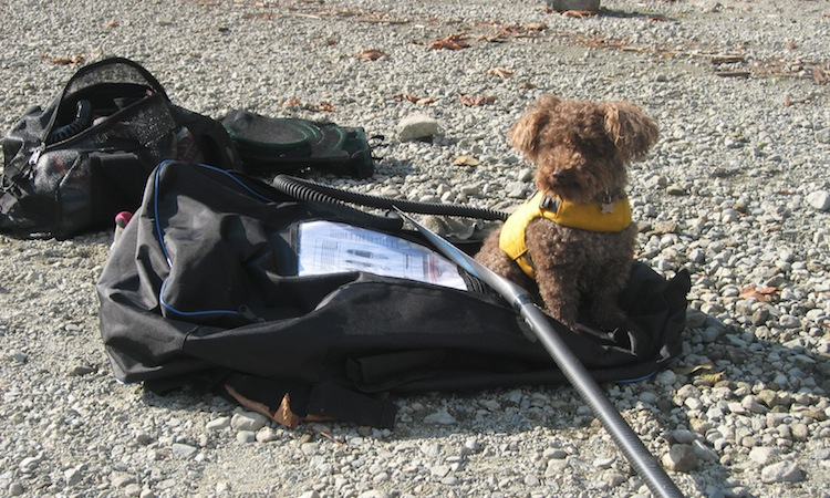 sup gear with dog