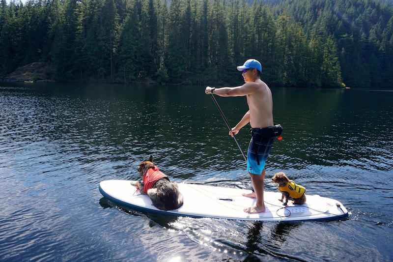 stand-up paddling with dogs - ISUPworld.com