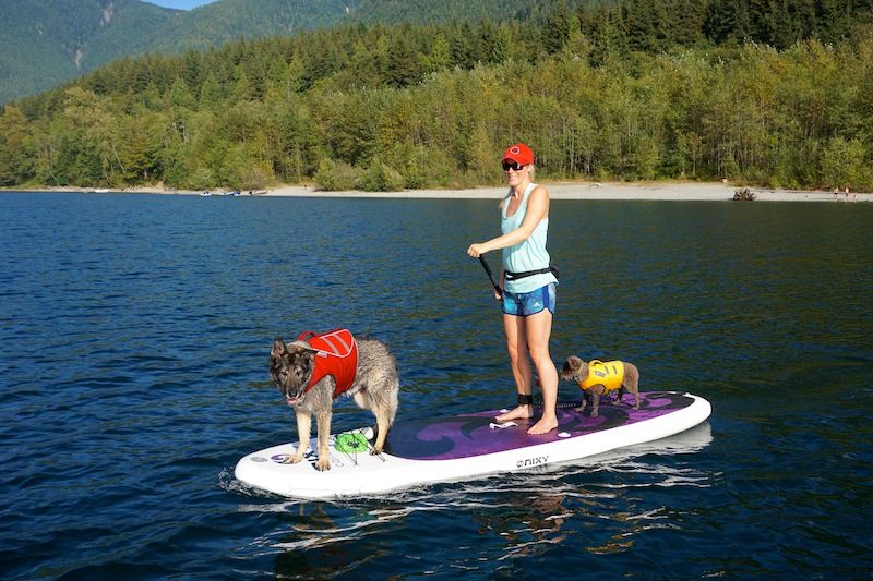 NIXY Venice paddle board dogs who love to SUP